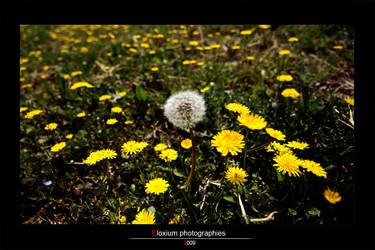 Flowers by DyrArt