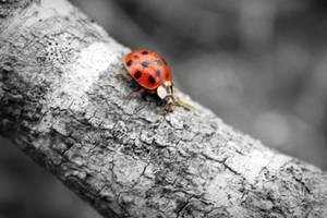 Lady Bug by kimberlyg