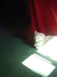 whitelight by iamkatia