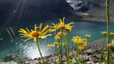 wilderness in altitude by Enckobweb