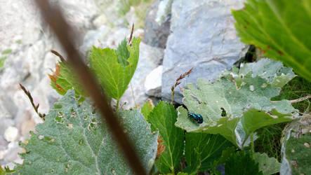 buglove by Enckobweb