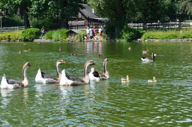 Lac Sauvabelin by dandelion-field