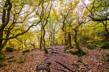 Padley Gorge by dandelion-field