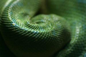 Green as a snake by Tori-Fan