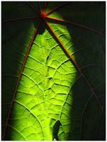 Green Autumn by aural