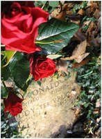A red rose to remember... by aural