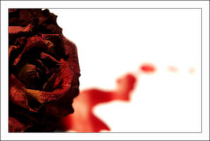 A rose to remember... by aural