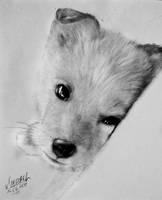 Puppy by Maarel