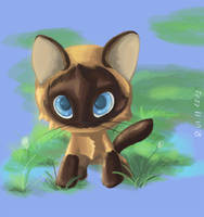 Kitten whose name is Raf by Antanariva