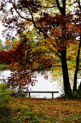 Fall Walk - 5 by aylura