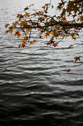 Fall Walk - 6 by aylura