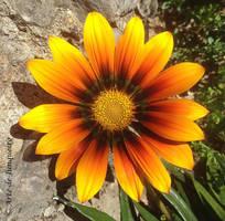 A beautiful birthday flower by Arte-de-Junqueiro