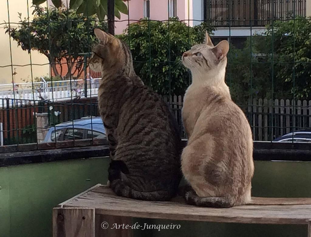Neighbourhood Watch by Arte-de-Junqueiro