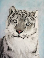 Snow Leopard by snapshot1989