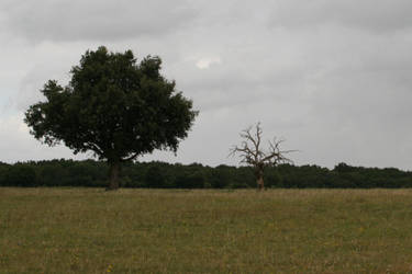 Desolation '3 _ Sick tree by Owps