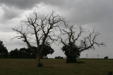 Desolation '5 _ Sick trees by Owps