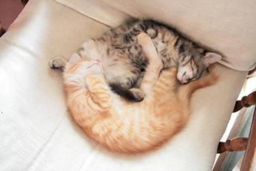 Sleeping kitties - Yin and Yang by Owps