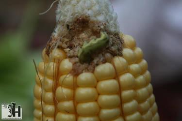 Corn by Magichadeel
