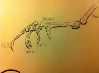 bird hand skeleton num:2 by bl1zzardst0rm