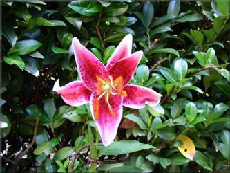 Independance Flower by WimpyIam