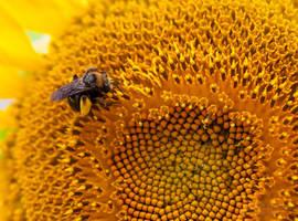 Bee by lupiniastudios