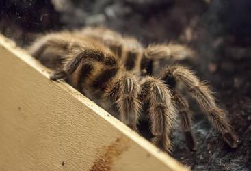 Arachnophobia by lupiniastudios