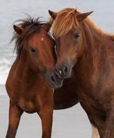 Pony Love by lupiniastudios