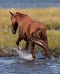 Splashy Pony by lupiniastudios