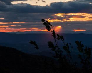Evening Silhouette by lupiniastudios