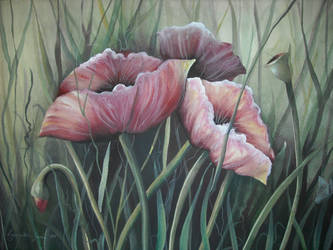 chinese poppies by shopgirl2