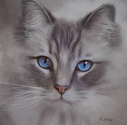Blue Eyes by BritaSeifert