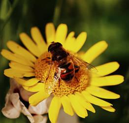 Bumblebee I. by SuirisWhite