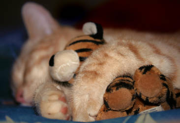 Tiger's Teddy by Paranoid-Duckkie