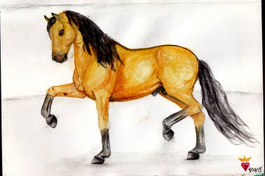 Horse-Buckskin-Andalusian-Stallion by Ministry-Maiden