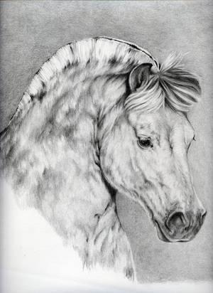 Horse Rai by Adniv