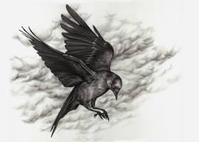 Black Bird by Adniv