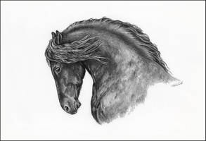 Friesian portrait by Adniv