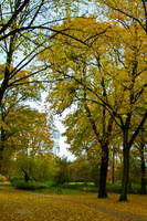 Yellow day by Bozack