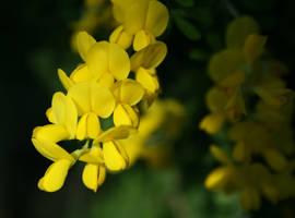 Yellow flowers raining down by Bozack