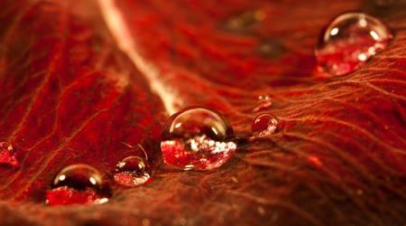 Rose pearls II by Bozack