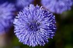 Tiny blue paradise by Bozack