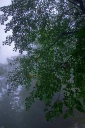 Foggy reality I by Bozack