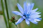 Velvet blue by Bozack