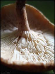 Mushroom - Shiitake - 6 by firedancer9