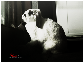The Bunny in the Window by Picanta