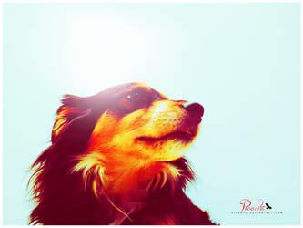 Feeling Powerful by Picanta