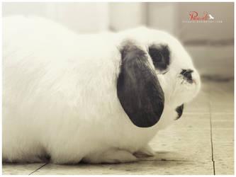 I'm a Bunny by Picanta