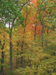 Fall Colors by vidthekid