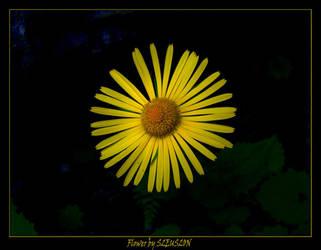 Mountain flower...... by ploiesti