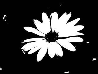 black flower by musicalrain